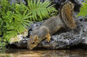 Nuss_Estrel_squirrel