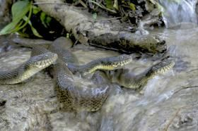franz_knibbe_water_snakes3_0